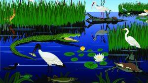 Ecology Day – POSTPONED