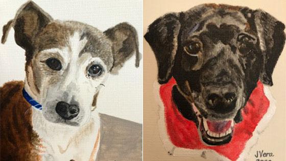 Introduction to Pet Portraits