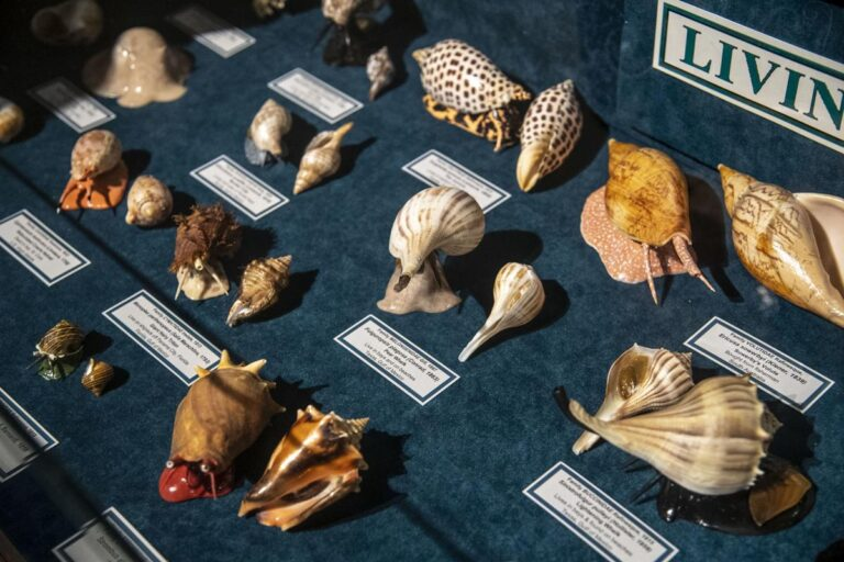 The Facts covers Brazosport Museum of Natural Science Open House