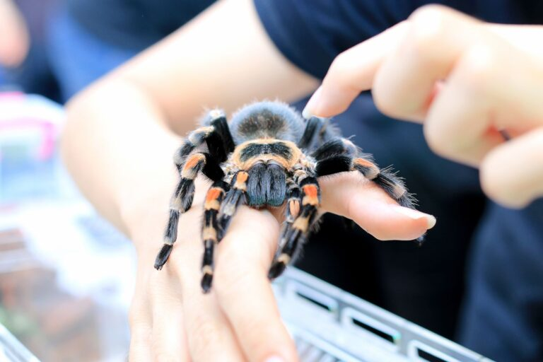 """Tickets On Sale Now: """"Bugs on Wheels"""" Slated for Saturday, Sept. 18"""